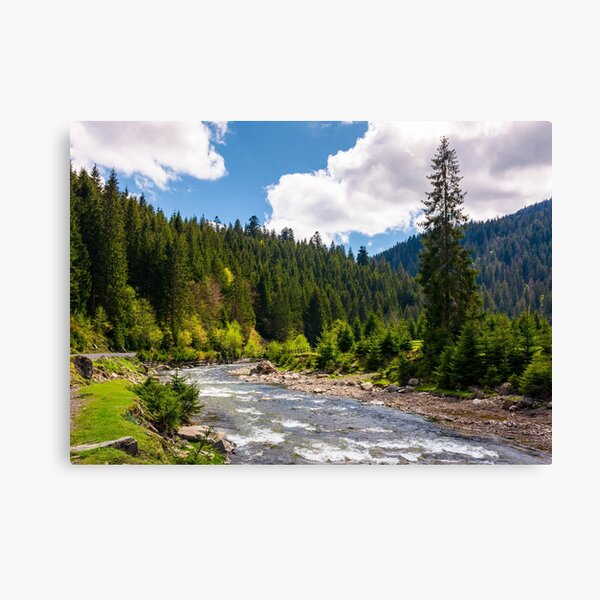 beautiful landscape with forest river in mountains Canvas Print