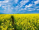Sunny Day !!! by Svetlana Sewell