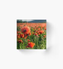 big red poppy flower on the field in mountains Acrylic Block