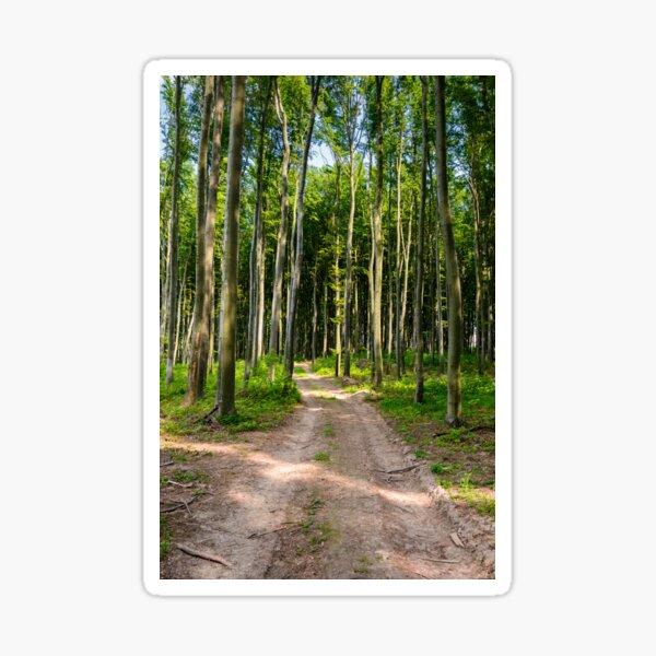 dirt road through beech forest Sticker