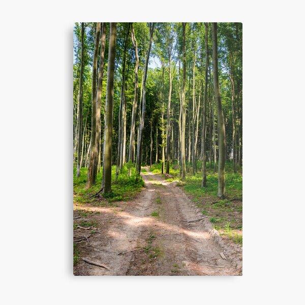 dirt road through beech forest Metal Print