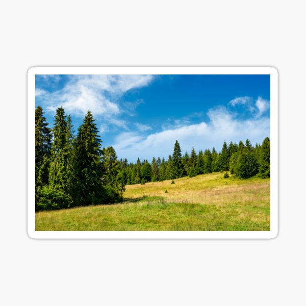 spruce forest on a grassy meadow Sticker