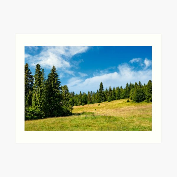 spruce forest on a grassy meadow Art Print