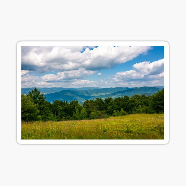 grassy meadow with wild herbs in mountains Sticker