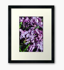 Macro Lilacs Framed Print