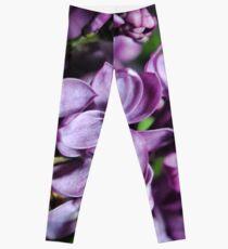 Macro Lilacs Leggings