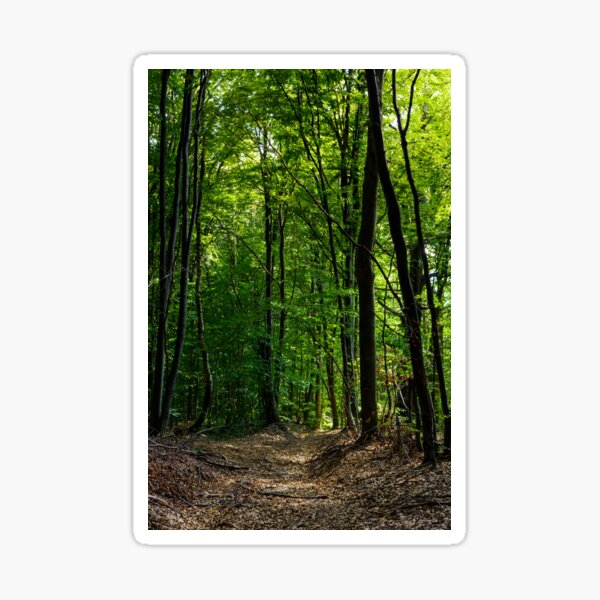 road through forest covered with weathered foliage Sticker