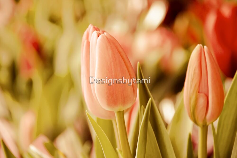 Pink in Spring by Designsbytami