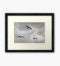 Gulls fly in a stormy sky...... Framed Print