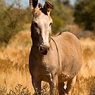 Wild Donkey by Richard  Windeyer