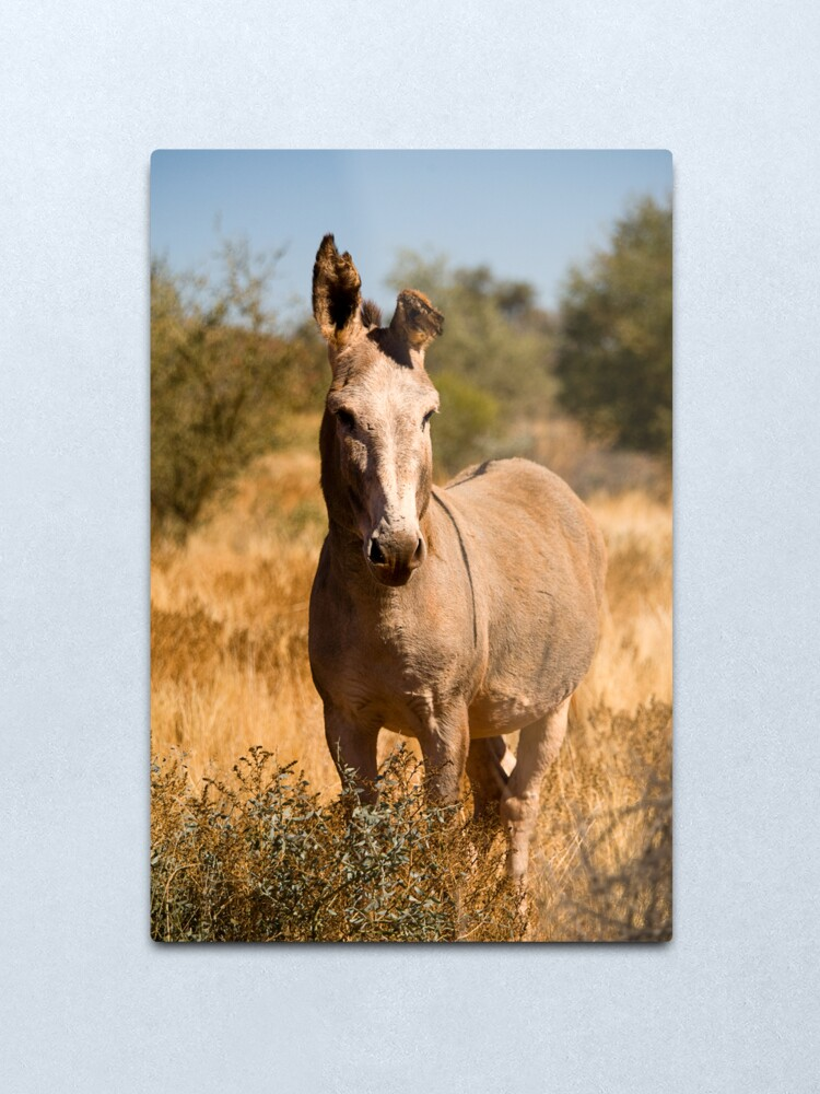 Alternate view of Wild Donkey Metal Print