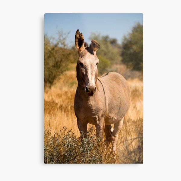 Wild Donkey Metal Print