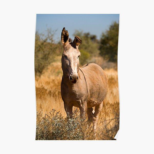 Wild Donkey Poster