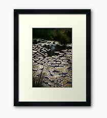 Stagnant Swamp, Nature is Beautiful Framed Print