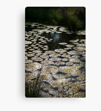 Stagnant Swamp, Nature is Beautiful Canvas Print