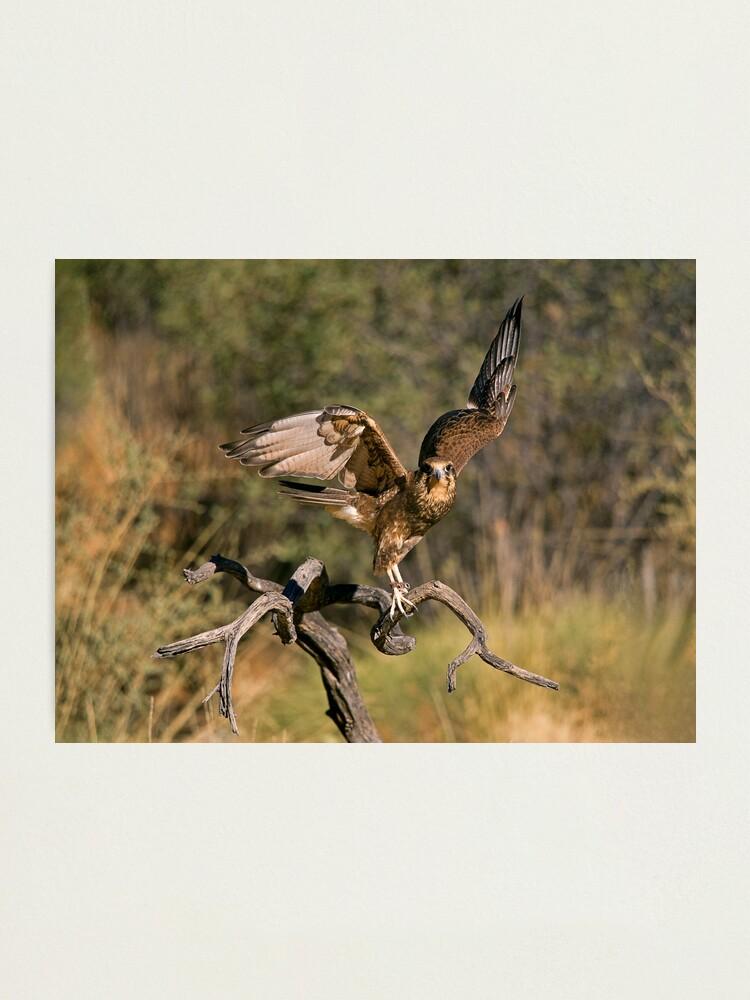 Alternate view of Raptor Photographic Print