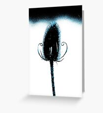 Blue Teasel Greeting Card