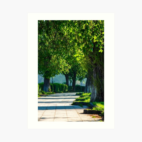 alley with old chestnut trees Art Print