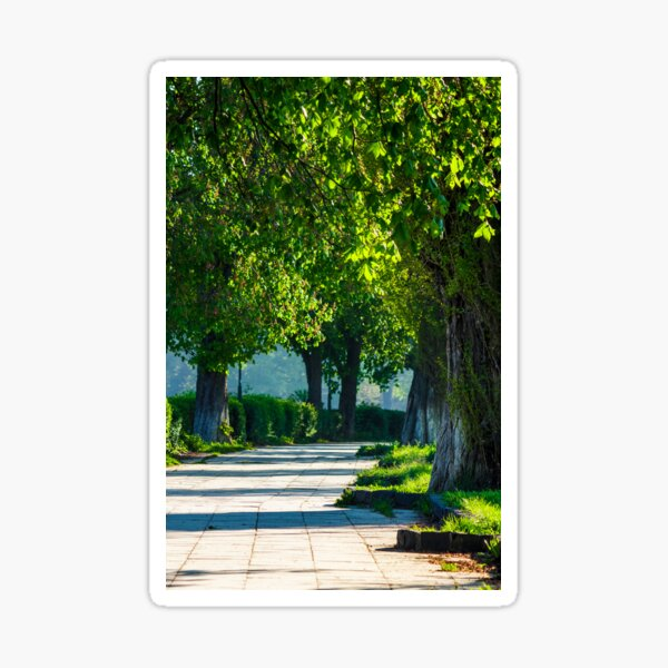 alley with old chestnut trees Sticker