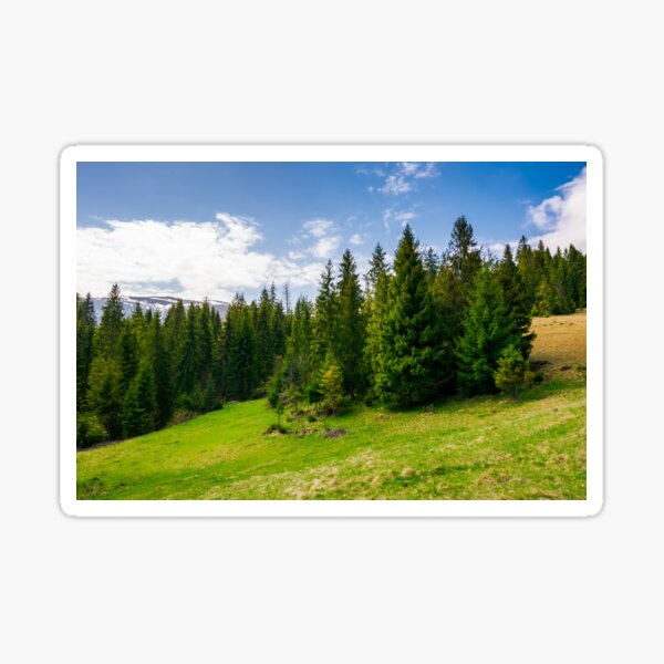 spruce forest on a mountain hill side Sticker