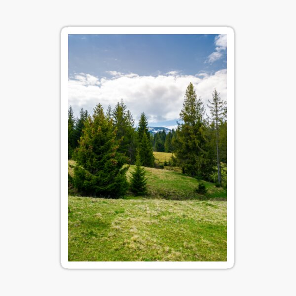 spruce forest on rolling hills Sticker