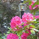 Brightness in the Garden by Pat Yager