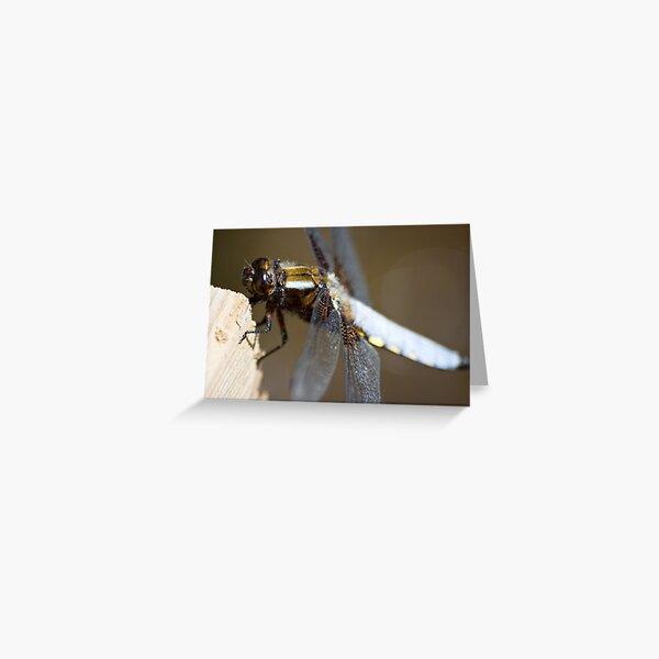 Broad-bodied Chaser (Libellula depressa) Greeting Card