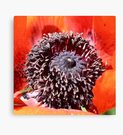 Opiated Centering Canvas Print