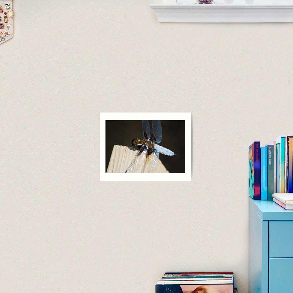 Broad-bodied Chaser (Libellula depressa) Art Print