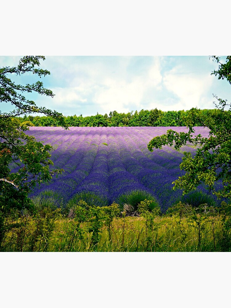 Summertime Lavender by ScenicViewPics