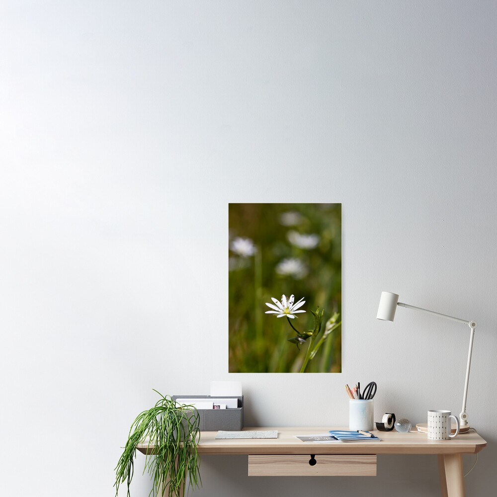 Lesser Stitchwort (Stellaria graminea) Poster