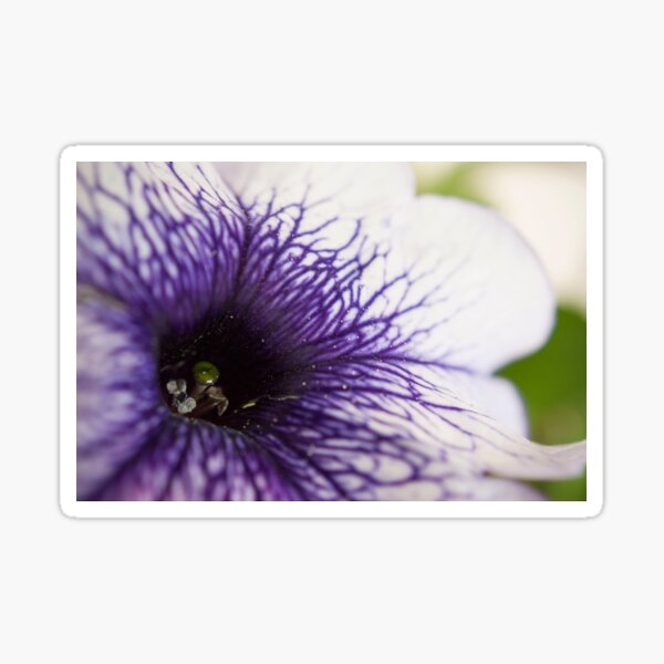Purple-veined Petunia Sticker