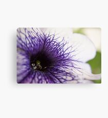Purple-veined Petunia Metal Print