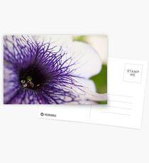 Purple-veined Petunia Postcards