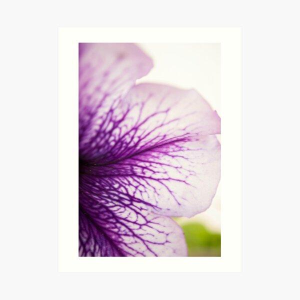 Purple-veined Petunia Petal Art Print