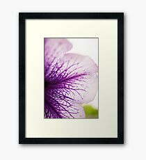 Purple-veined Petunia Petal Framed Print