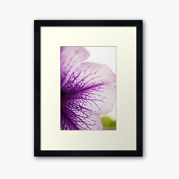 Purple-veined Petunia Petal Framed Art Print
