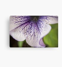 Bottom Purple-veined Petunia Petal Metal Print