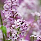 A Sea of Purple by Mike Whitman