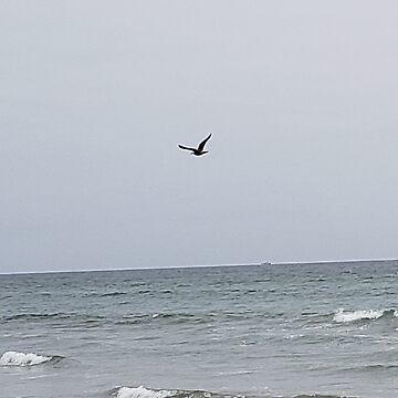 Bird at Sea  by TimRobinson