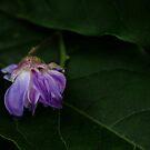 Fallen flower by Agnes McGuinness