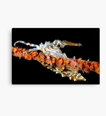 Xeno Crabs Canvas Print