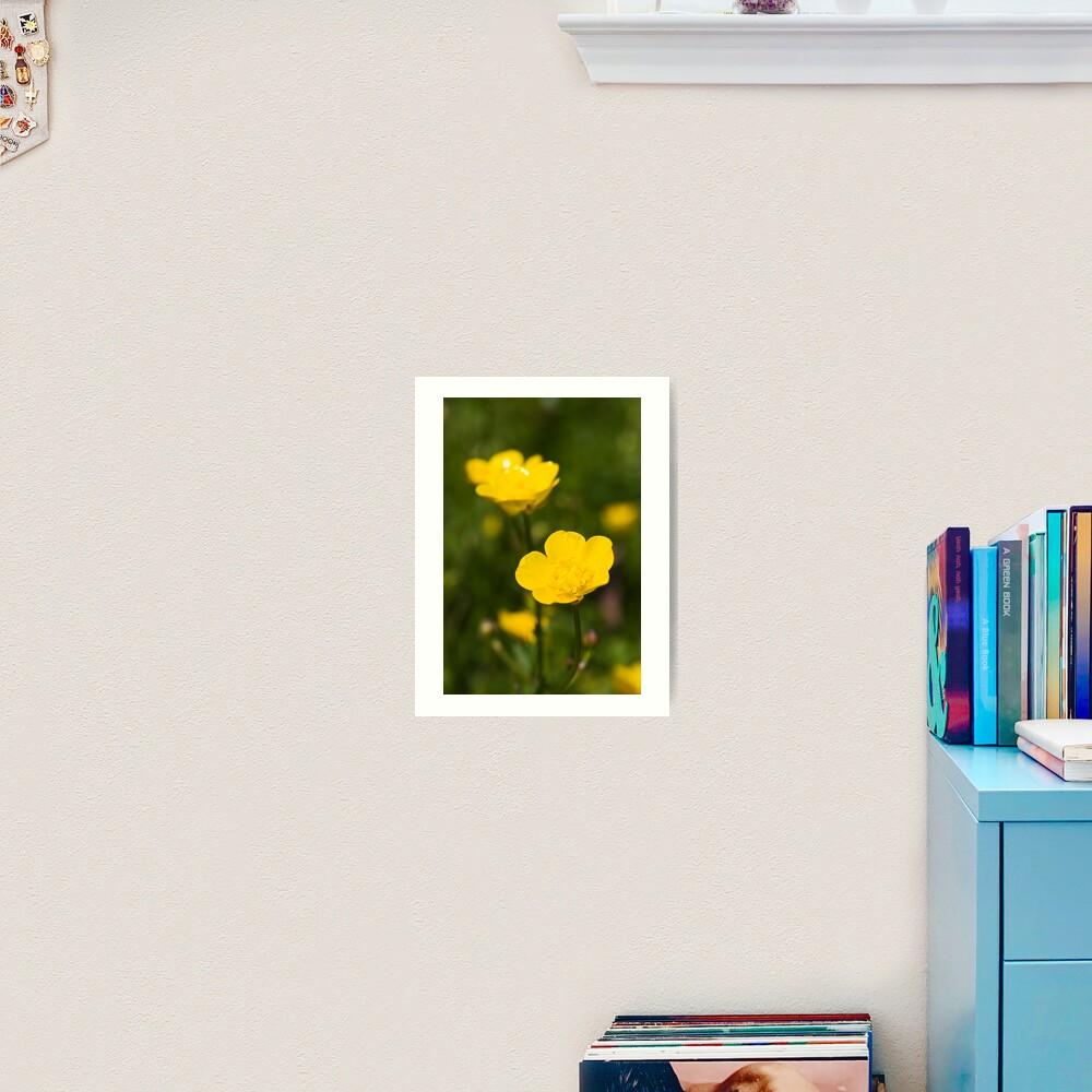 Meadow Buttercup (Ranunculus acris) Art Print