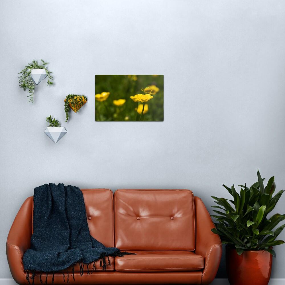 Meadow Buttercup (Ranunculus acris) Metal Print