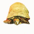 Tortoise by Donna Chapman