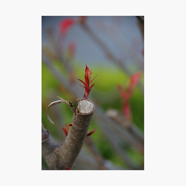 Spring Loaded Photographic Print