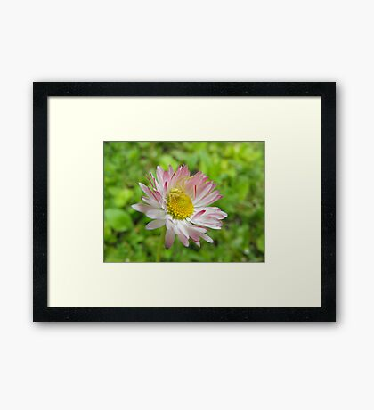 This is my flower! Mine! Framed Print