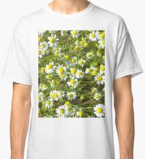 Photo of camomile flowers Classic T-Shirt