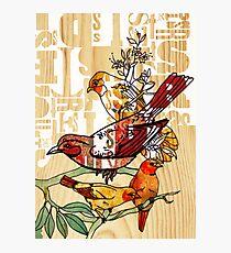 letterpress birds Photographic Print