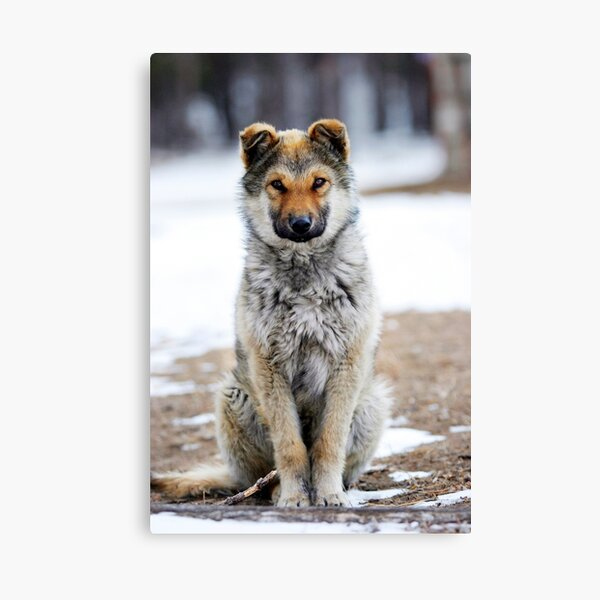 The Protector Canvas Print